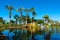 Palm Trees On Side Of Lake With Reflection Stock Photography - 50361612