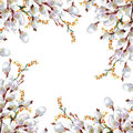 Spring, Blossoming Pussy-willow ,  Watercolor Stock Images - 50366284