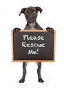 Cute Puppy Holding Rescue Me Sign Stock Images - 50401354