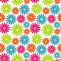 Seamless Floral Pattern. Flowers Texture. Daisy. Royalty Free Stock Photography - 50436297