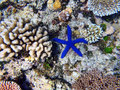 Great Barrier Reef Royalty Free Stock Photos - 50449048