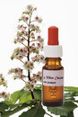 Bottle With Bach Flower Stock Remedy, White Chestnut (Aesculus Hippocastanum) Stock Photo - 50482830