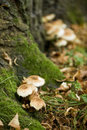 Germany, Swabian Mountains, Mushrooms Growing On A Mossy Tree Trunk Stock Image - 50495651