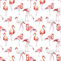 Flamingo Pattern Royalty Free Stock Photo - 50515535