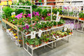 MOSCOW, RUSSIA - FEBRUARY 15, 2015: Potted Plants Stock Photos - 50515933