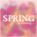 Wake Up. Spring Is Coming Lettering On Unfocused Royalty Free Stock Photography - 50548047