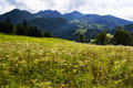 The Meadows And Mountains Near Wiesensee Austria Royalty Free Stock Photo - 50575075