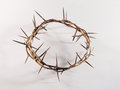 Crown Of Thorns Royalty Free Stock Images - 50594899