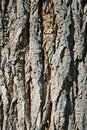 Rough Bark Stock Photo - 5061270