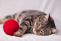 Cat Playing With Ball Of Red Yarn Royalty Free Stock Photos - 50601448
