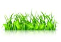 Green Grass And Leaves Stock Photography - 50606332