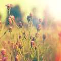 Abstract Natural Backgrounds With Summer Foliage Stock Image - 50620261