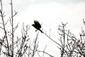 Bird Silhouette Royalty Free Stock Images - 50629069