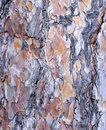 Red Pine Bark Texture Royalty Free Stock Photo - 50762305