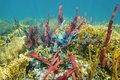 Coral Reef Underwater With Colorful Sponges Royalty Free Stock Photo - 50792925