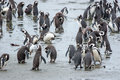 Penguins Standing On Shore In Chile Stock Photography - 50794142