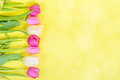 Row Of Multicolored Tulips For Border Or Frame Royalty Free Stock Image - 50795716