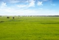 Paddy Field Royalty Free Stock Images - 50860709