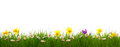 Green Grass And Colorful Spring Flowers. Royalty Free Stock Photo - 50868115