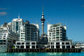 Auckland Sky Tower Royalty Free Stock Photo - 50871725