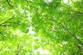 Beech Forest Stock Images - 50880204