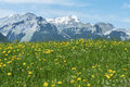 Meadow And Mountain Royalty Free Stock Photography - 50880847