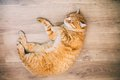 Peaceful Orange Red Tabby Cat Male Kitten Sleeping Stock Images - 50936254