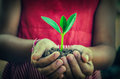 Hand Holding Green Young Plant Stock Photos - 50942803