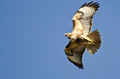 Red-Tail Hawk Flying In A Blue Sky Royalty Free Stock Photo - 50968025