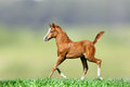 Foal On Nature Royalty Free Stock Photos - 51001048