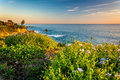 Flowers And View Of The Pacific Ocean   Stock Image - 51045701