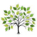 Hand Draw Abstract Green Tree, Vector Illustration Royalty Free Stock Photography - 51056077