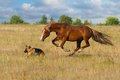 Horse And Dog Run Royalty Free Stock Image - 51058066