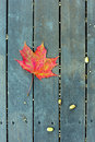 The Red Maple Leaf On A Green Bench In Autumn Royalty Free Stock Image - 51064726