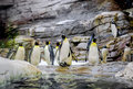 Penguins Royalty Free Stock Photography - 51066877