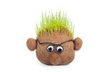 Head With Grass On Top Over White Background Stock Photos - 51098813
