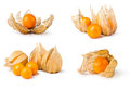 Ripe Physalis Stock Images - 51099494