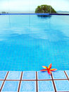 Red Tropical Flower, Blue Resort Swimming Pool Stock Image - 5119291