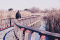 Man Walking Over A Wood Bridge In The Nature, With A Backpack. Stock Photography - 51106162