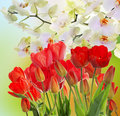 Garden Fresh Red Tulips On Abstract  Background Stock Photo - 51133260
