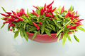 Red Chilli Stock Photography - 51151772