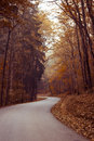 Autumn Path Royalty Free Stock Image - 51152196