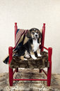 Beagle Puppy In A Chair Stock Photography - 51163022
