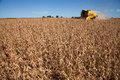 Soybean Harvest. Stock Images - 51167734