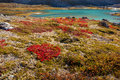Autumn Highland Plants In Norway Gamle Strynefjellsvegen Royalty Free Stock Photos - 51236088