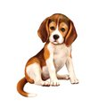 Beagle Puppy Siting Over White Royalty Free Stock Photo - 51248815