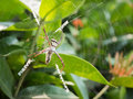 A Spider Hunting On The Web Royalty Free Stock Photography - 51285547