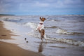 Dog Playing In Water Royalty Free Stock Images - 51286969