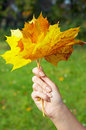 Autumn Leaves Royalty Free Stock Images - 5134179