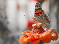 Butterfly Stock Images - 51342944